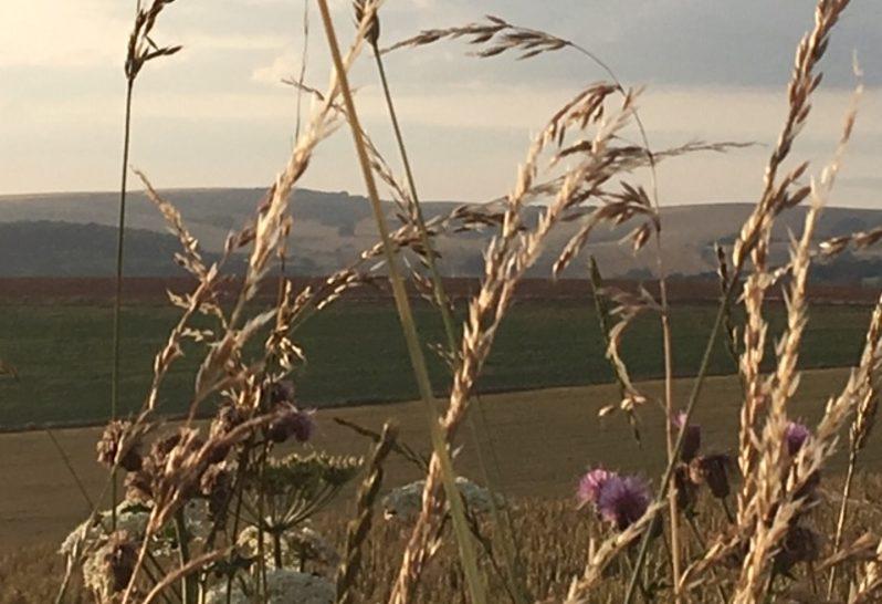 downland view