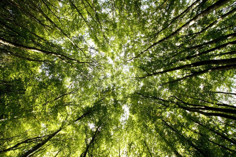 Come and sing amongst the trees with Grow